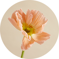 Blooming flower to represent lifestyle blog